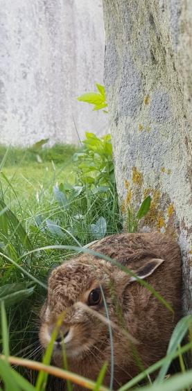 Stonehenge origins